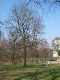 Seidel tree
