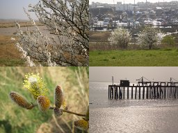 Canvey in spring