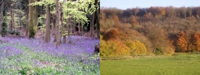 Beechwood in spring and autumn