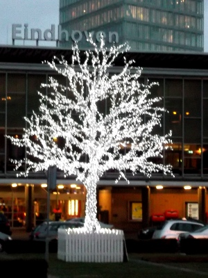 A tree in Eindhoven