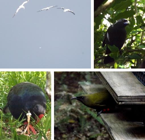 Birds on Tiri