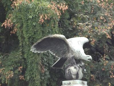 Budapest bird