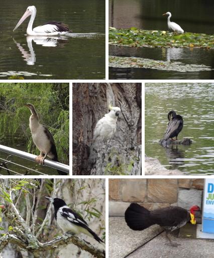 Brisbane birds