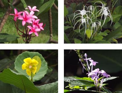 Singapore flowers