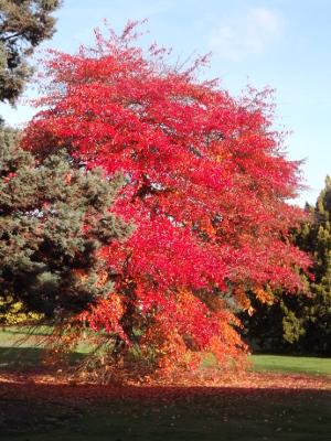 Tree at University of Reading