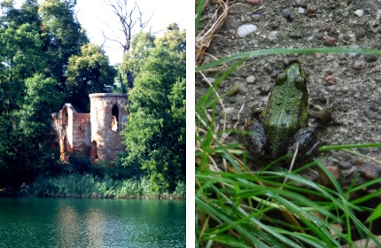 Castle and frog